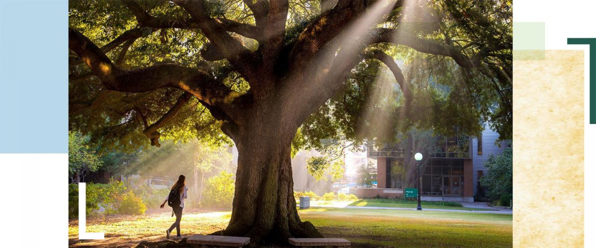 Student walks under oak tree on campus